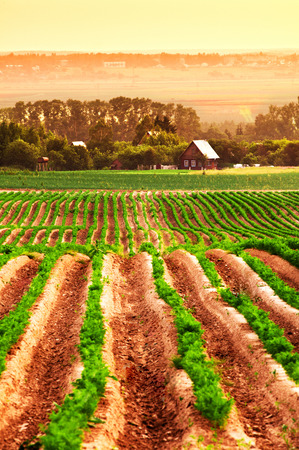 Agricultural field with a house in the background Imagens - 48379663