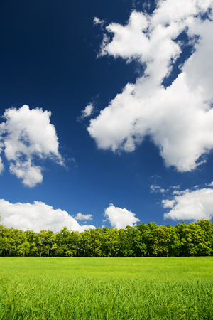 clouds sky: Green city park with trees. Beautiful summer landscape