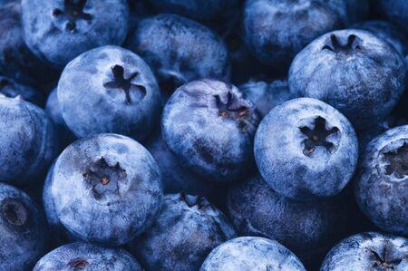 bilberry: Fresh ripe bilberry close up