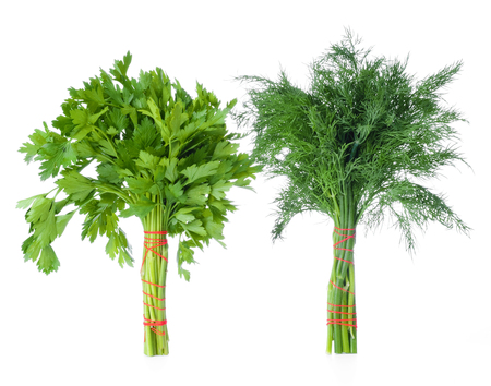 fascicle: bunch of parsley and dill isolated on a white background