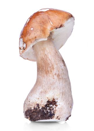 edulis: Raw boletus edulis isolated on white background Stock Photo