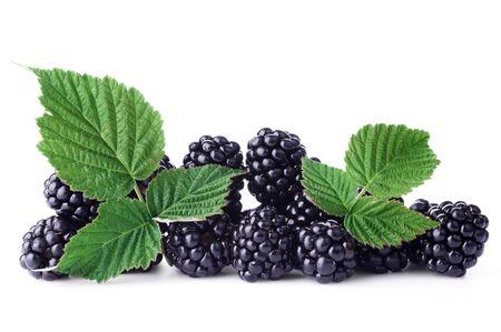 fresh leaf: Fresh blackberry with green leaf on white background