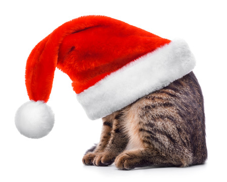 holiday pets: Cat in Santa Claus red hat isolated on white background