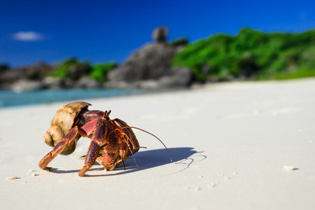 Big hermit crab on the tropical island Stock Photo