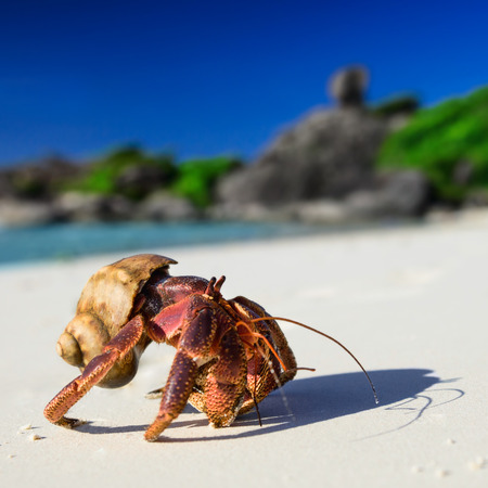 blue spiral: Big hermit crab on the tropical island Stock Photo