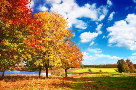Herfst in het park van de ochtend Stockfoto