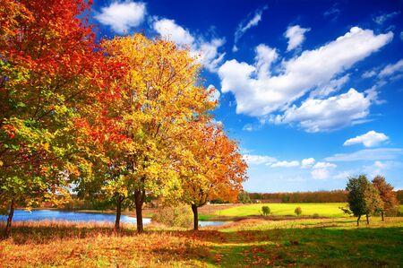tree in autumn: Autumn at the morning park Stock Photo