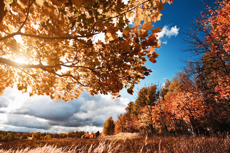 Autumn landscape with colorful maple tree Stok Fotoğraf - 80521545