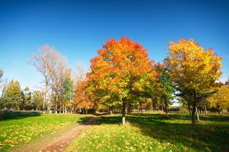 field maple: autumn landscape