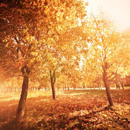 Herfst landschap met kleurrijke esdoorn boom Stockfoto