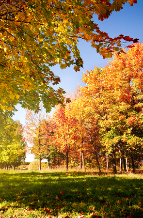 Autumn landscape with colorful maple tree Stok Fotoğraf - 80521556