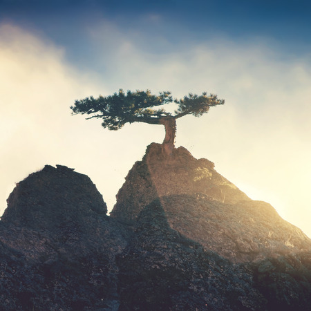 fog: Lonely tree on a top mountain in the evening Stock Photo