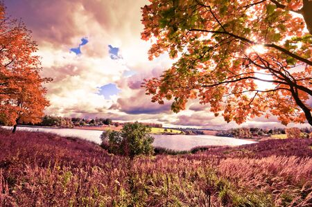 Autumn landscape with colorful maple tree