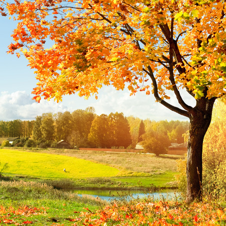 autumn colors: autumn landscape