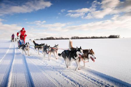 perro corriendo: Musher mujer esconderse detrás de trineo en la carrera de trineos en la nieve en invierno Foto de archivo