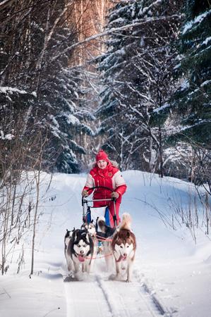 Vrouwenmusher het verbergen achter ar bij sledehondenras op sneeuw in de winter Stockfoto