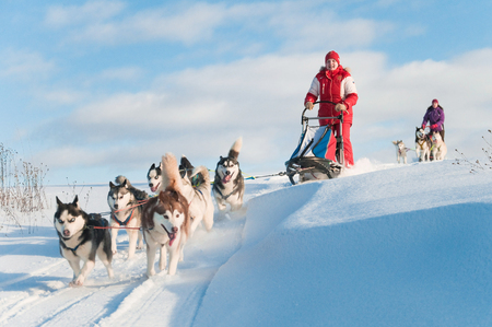 Woman musher hiding behind sleigh at sled dog race on snow in winter Reklamní fotografie - 80124707