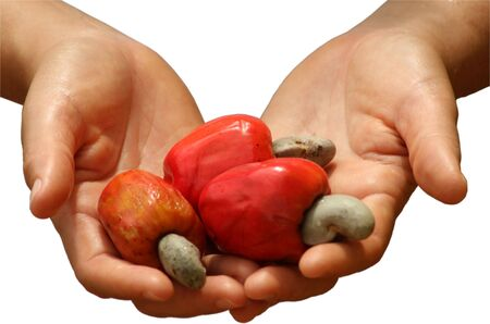 plucked: Open Hands Holding Red Cashew Fruits
