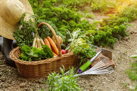 a corf full with vegetables in the garden Banque d'images