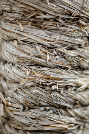 natural old dryish zoster or sea grass texture as a background Stock Photo