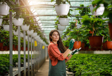 Cropped portrait of young female gardener in the sunny greenhouse Stock fotó