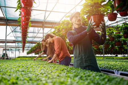 Teamwork of male and female gardeners in the sunny greenhouse. Young workers concept in the hothouse. Farmers working in horticulture, arranging and nursing plants.