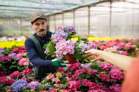 Male gardener with long mustache working in the greenhouse, arranging and nursing plants and flowers. Farmer and horticulture concept.