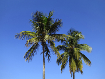 gusty: Coco palms in Inhambane, Mozambique, Africa