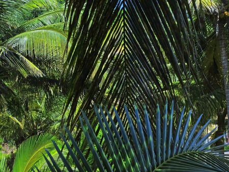 southern africa: Coco palms in Barra. Inhambane, Mozambique, Southern Africa Stock Photo