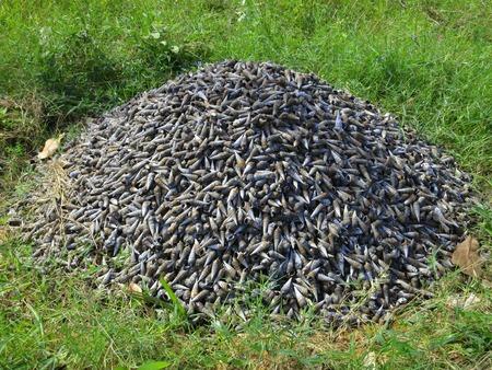 Heap of snail shells in Inhambane. Mozambique, Southern Africa