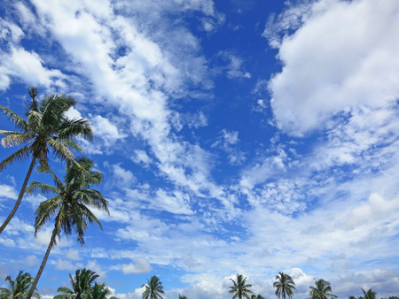 southern africa: Coconut palms with blue sky and cumulus clouds. Inhambane province, Mozambique, Southern Africa Stock Photo