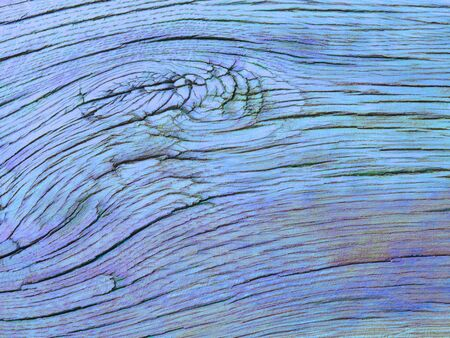 Blue colored oak wood texture Stock Photo