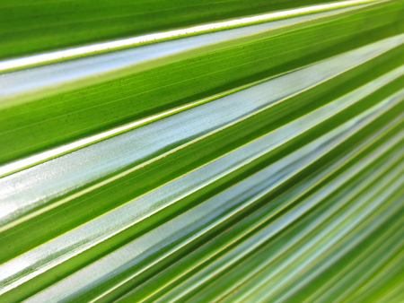 Texture of a coco palm leaf. Linga Linga, Inhambane, Mozambique, Southern Africa Stock Photo - 60390032