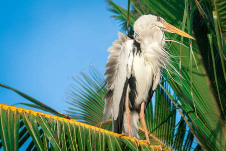 ciconiiformes: stork on a palm tree. close up