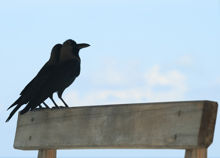 ravens against the sky, Maldives photo