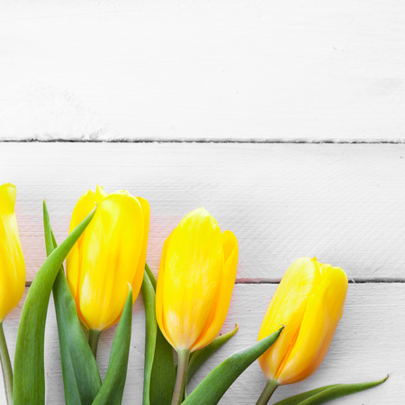 bright yellow: Yellow tulips on a wooden surface Stock Photo