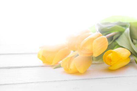 tulip: fresh yellow tulips