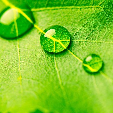 leaf water: Water drop on leaf