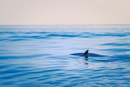 danger: Fin de un tiburón en alta mar. Tiro al aire libre