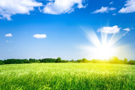 outdoor shot: sunset over agricultural green field. outdoor shot Stock Photo