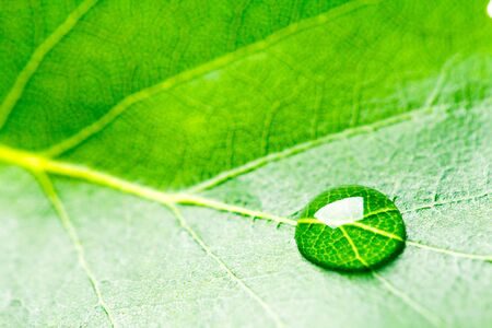 drop water: Water drop on leaf. Stock Photo