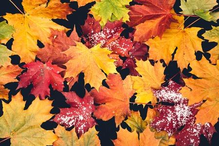 autumn leaf on black background. studio shot