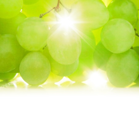 Grapes against the sun