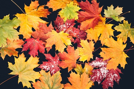 autumn foliage in different colors