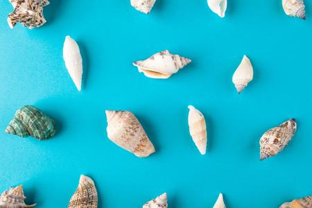 Set shells. Minimal art design Stock Photo