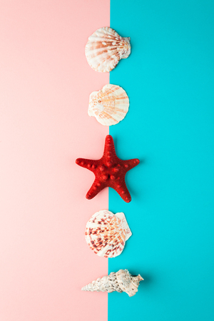 seashells and starfish laid out in a line Stock Photo