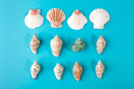 Set of seashells on pastel aqua background