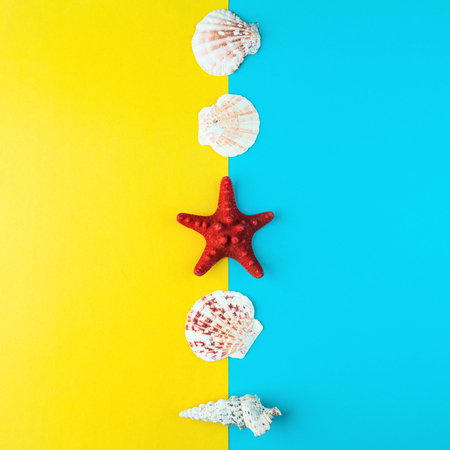 seashells and starfish laid out in a line Stok Fotoğraf