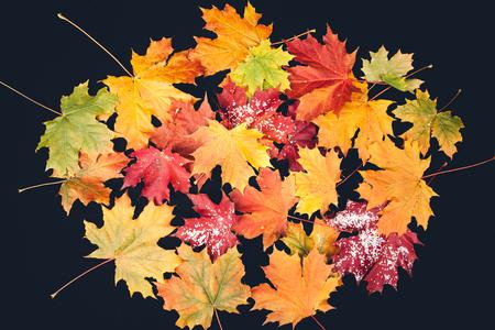 yellow autumn leaves on the dark background Stock Photo