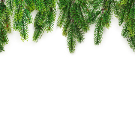 Christmas tree branches on white background as a border or template Stock Photo